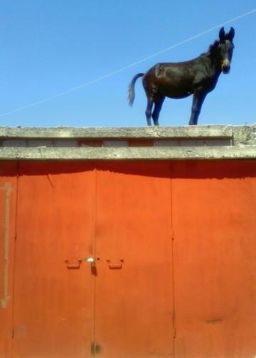 Mule On Top